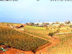 Blick auf die Weinplantage