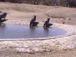 Wasserloch nahe des Camps Orpen