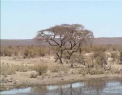 Blick auf die Savanne
